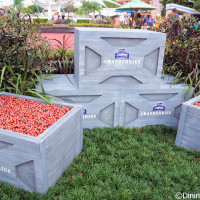Ocean Spray cranberry bog - 2014 Epcot Food and Wine Festival